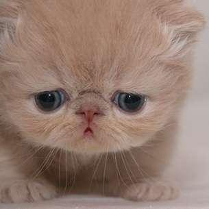 ブサカワ猫の画像