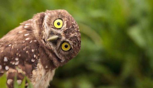 フクロウの画像58枚を紹介!可愛く美しいフクロウを厳選!
