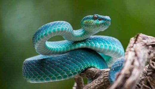 ヘビのかわいい画像まとめ!57枚紹介!小さいヘビもあるよ!