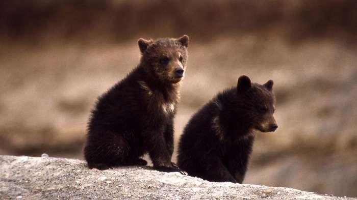 子熊の画像