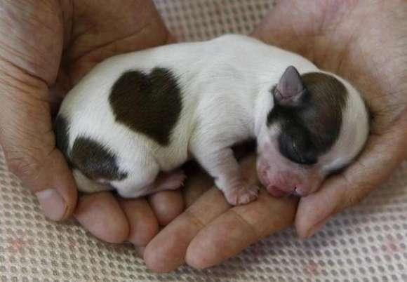 子犬の画像