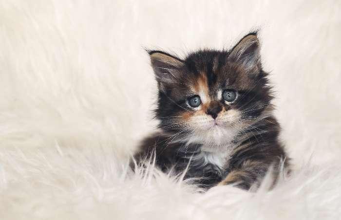 子猫の画像