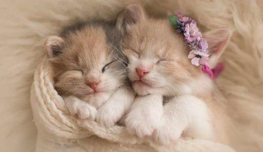 子猫の画像まとめ!59枚紹介【かわいい子猫を厳選】