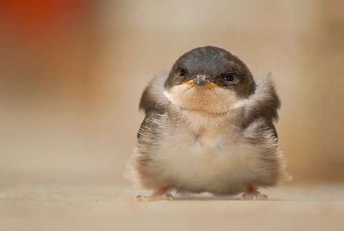 小鳥の画像