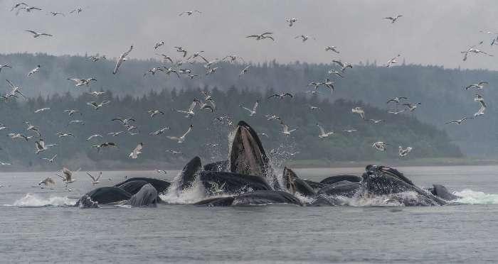 クジラ画像