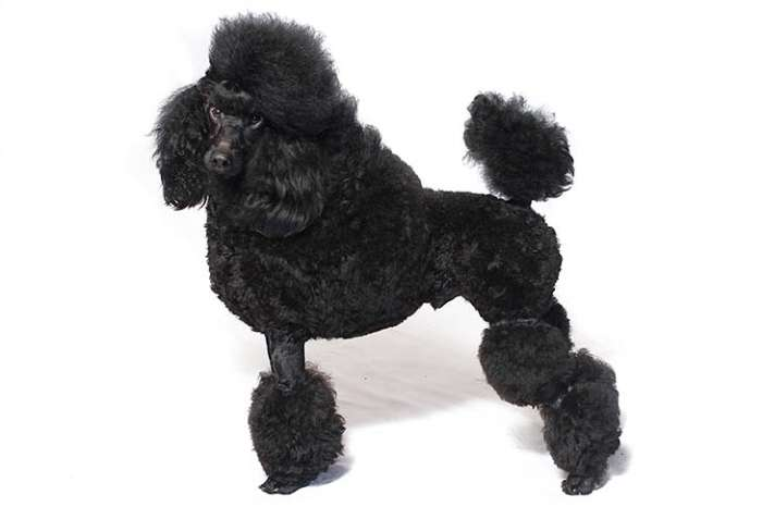 もふもふ犬画像