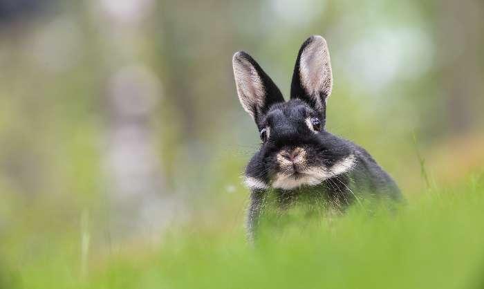 ウサギ画像
