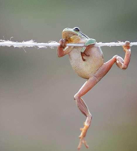 カエル画像