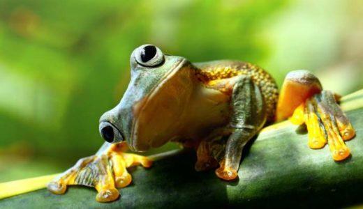 カエルの画像まとめ!59枚紹介!かわいいカエル多数収録!